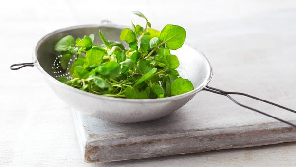watercress_16x9